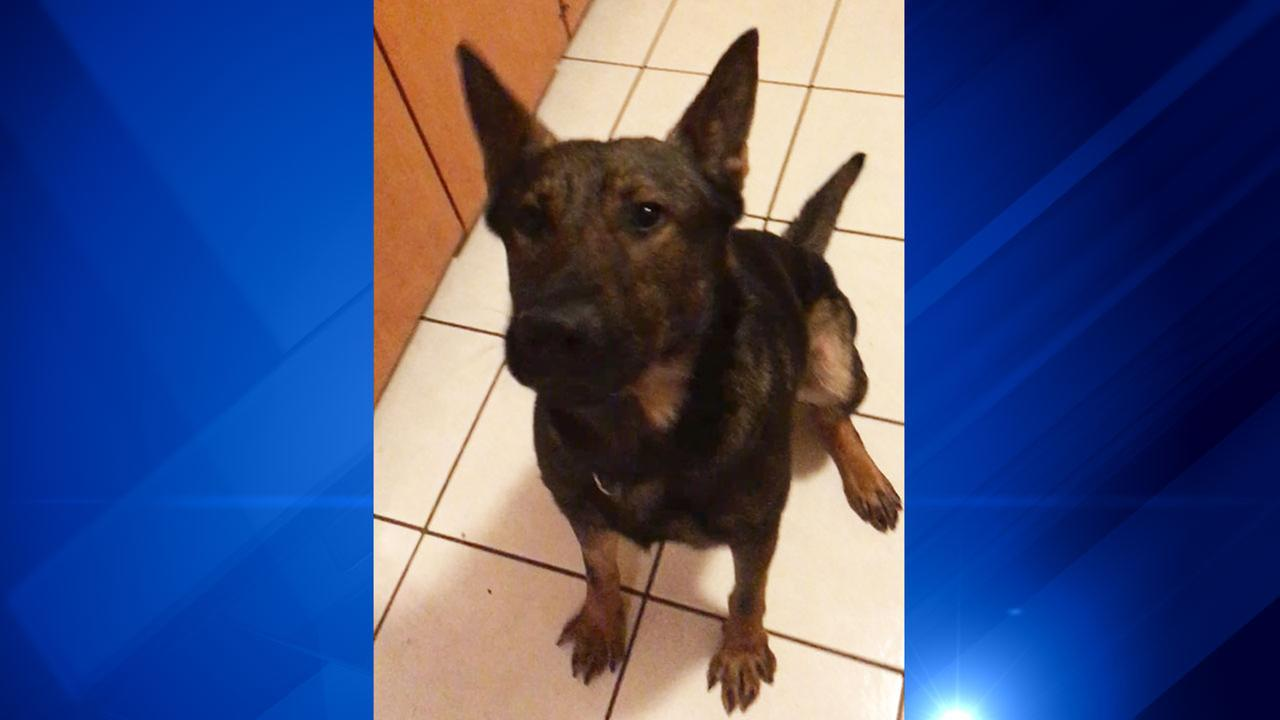 Bomb-sniffing TSA dog missing from suburban Alsip