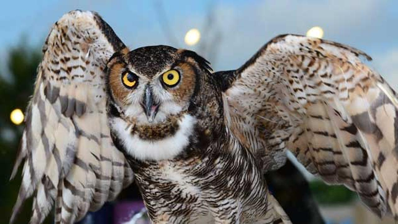 A suburban man is facing federal prosecution for allegedly violating the Migratory Bird Treaty Act by having feathers of a great horned owl and several other birds.