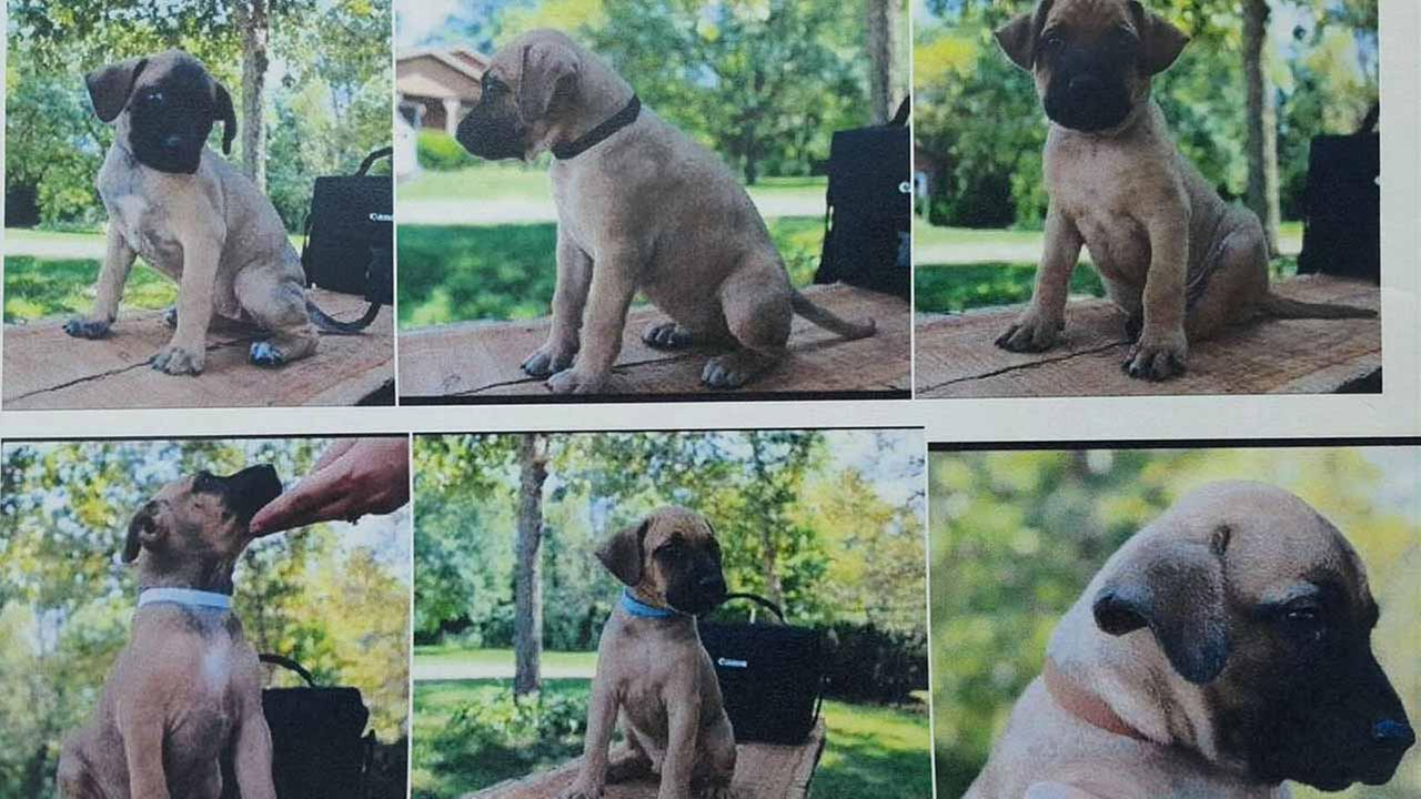 Police said that three of the puppies were found dead and one other alive. Two remain unaccounted for.