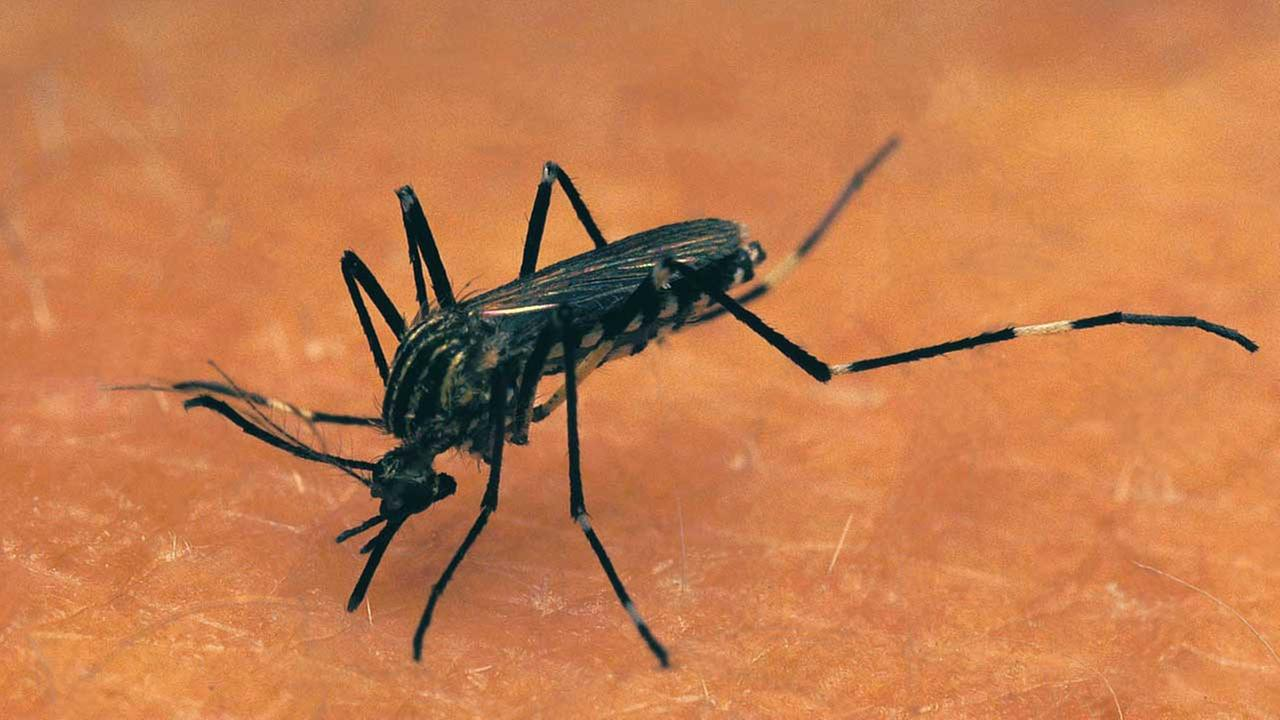 Kane County mosquitoes test positive for West Nile virus