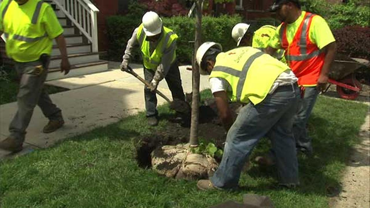 Tree trimming backlog expected to be eliminated by end of 2016
