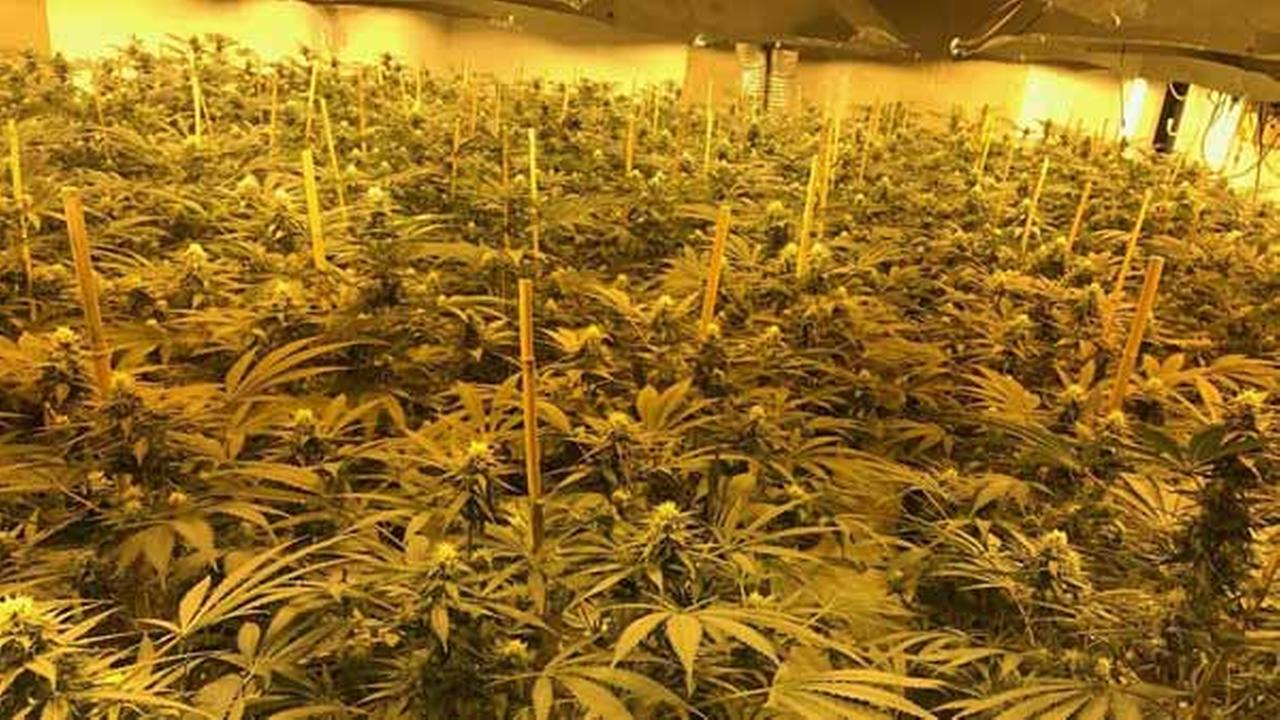 Authorities in the UK say thousands of cannabis plants were discovered during a raid on a nuclear bunker in Wiltshire on Feb. 23, 2017.