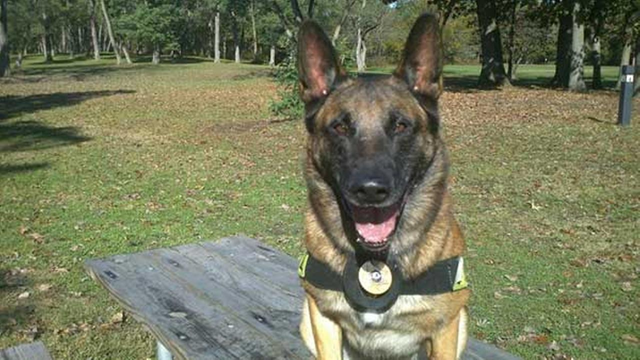 K9 Chico passed away from cancer after working for Calumet City Police for almost seven years.