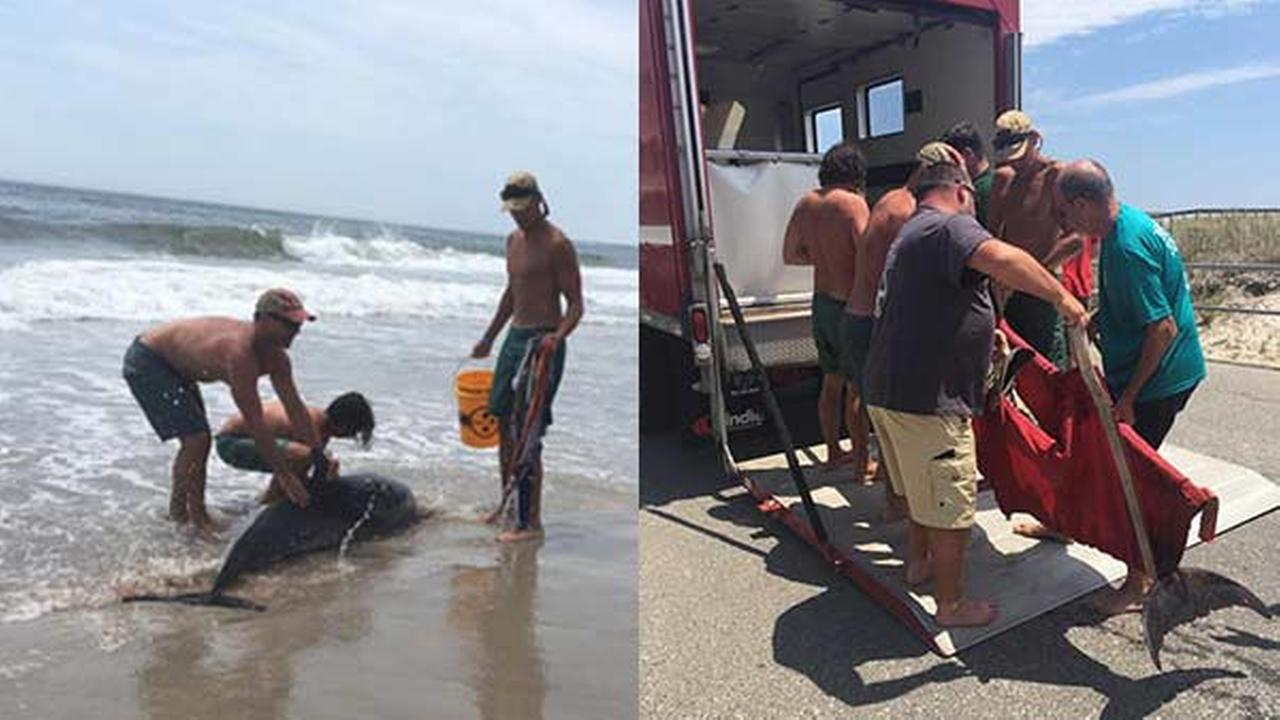 A group of beach-goers helped rescue a dolphin that had beached itself along the New Jersey shore.
