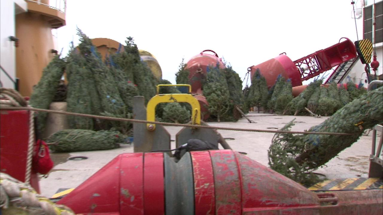 chicagos christmas tree recycling begins jan 4 - Chicago Christmas Tree Recycling