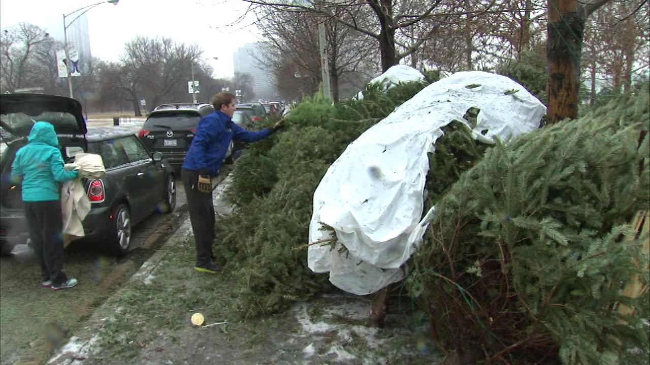 Christmas tree recycling begins at 23 locations in Chicago ...