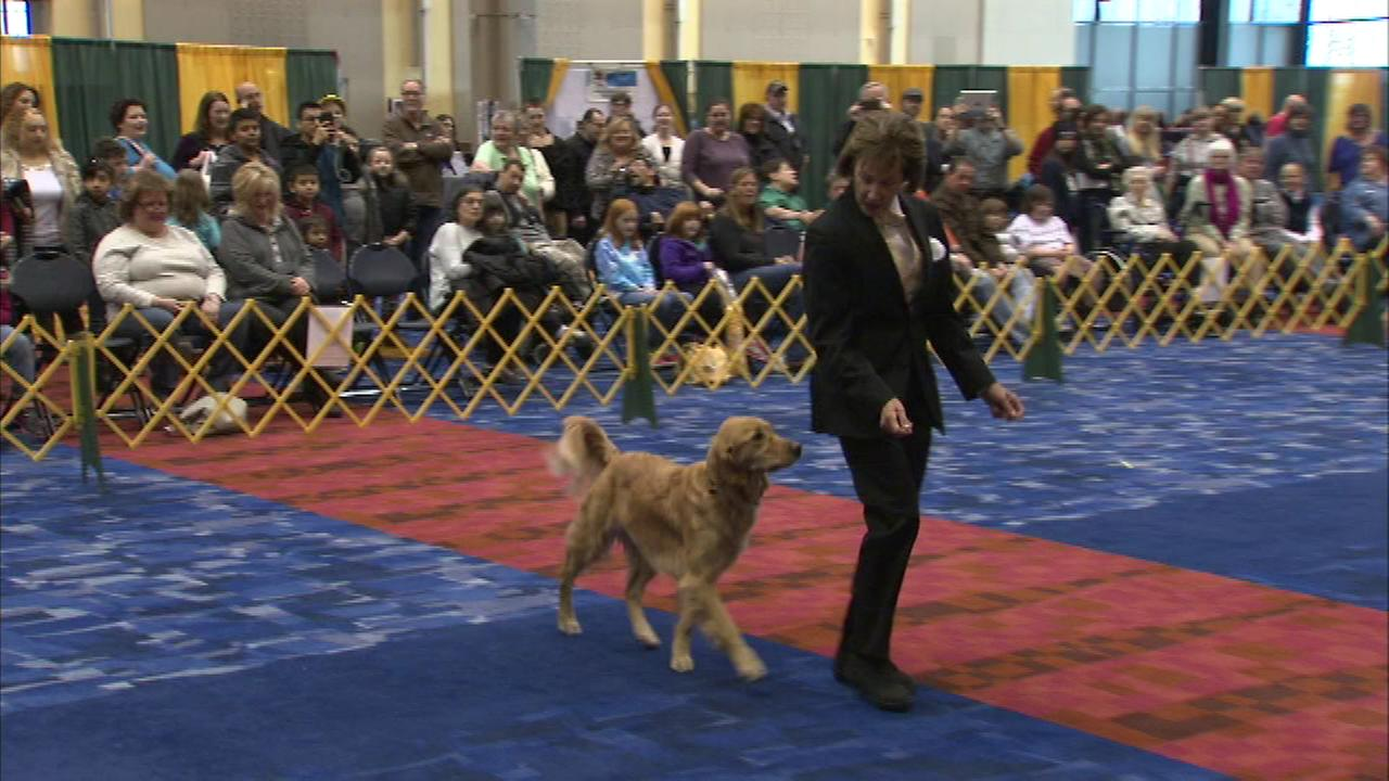 McCormick Place hosts 'International Cluster of Dog Shows'