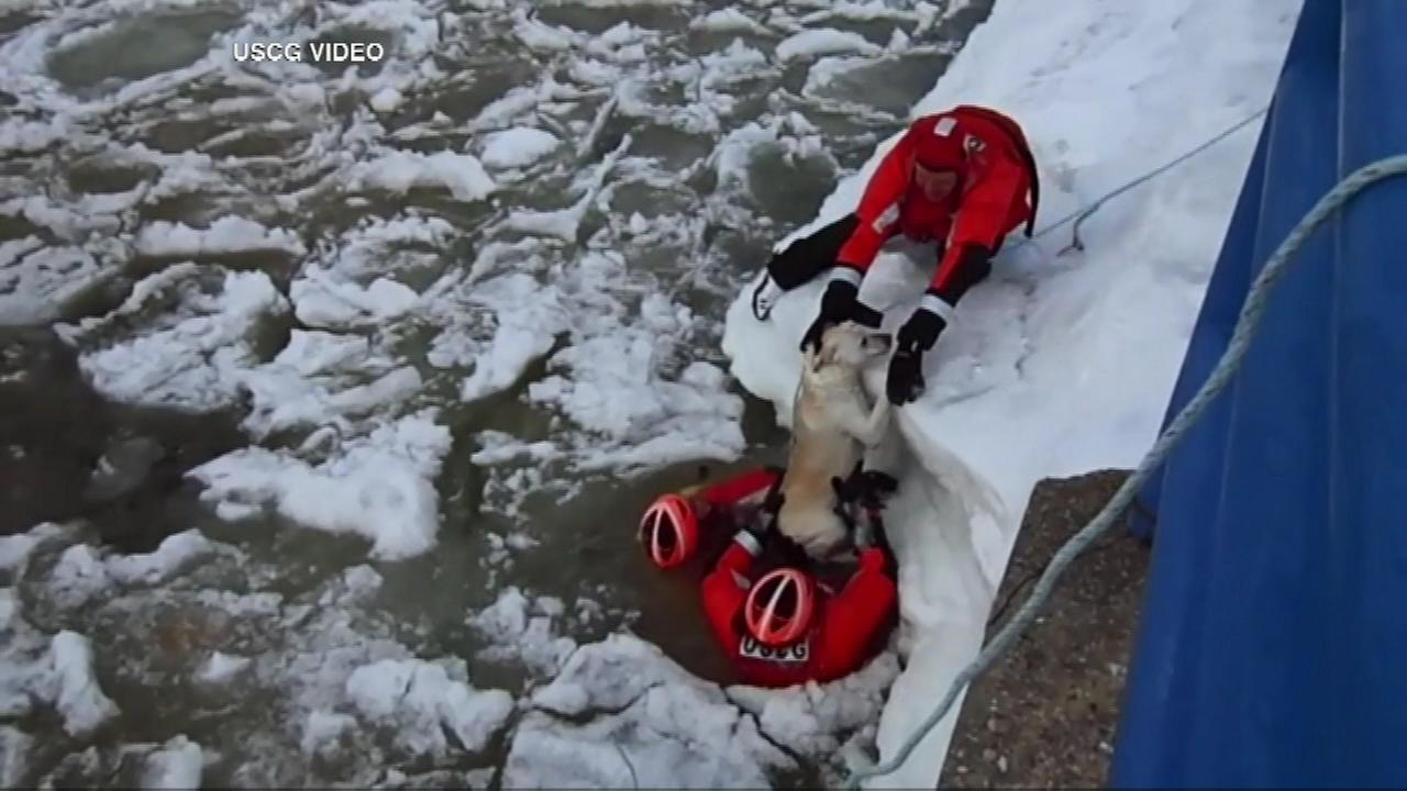 An ice rescue team from Coast Guard Station Frankfort rescued a dog on Tuesday after it jumped into icy Betsie Bay in northern Michigan.