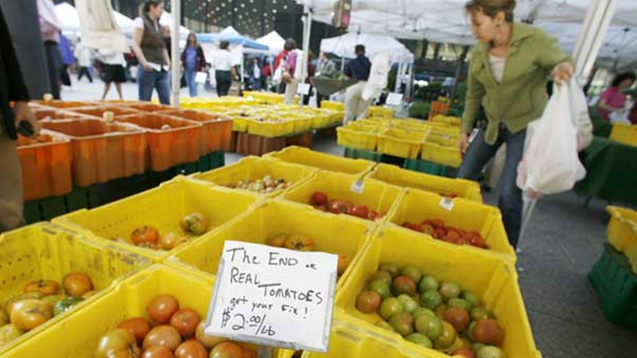 Shoppers pick through tomatoes at the Chicago Farmers market in Federal Plaza.