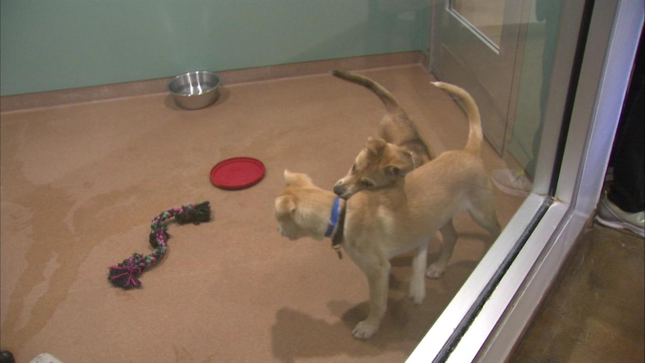 PAWS holds pet adoption marathon
