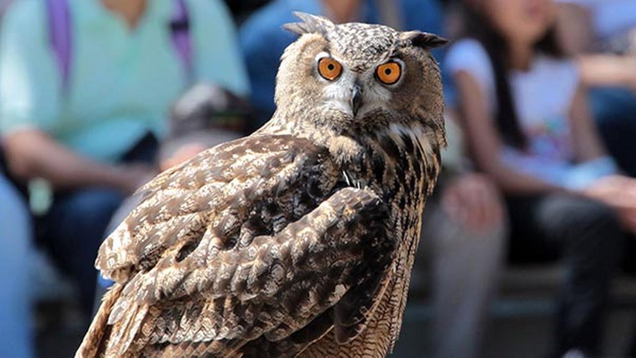 Brookfield Zoo free for children through Wednesday