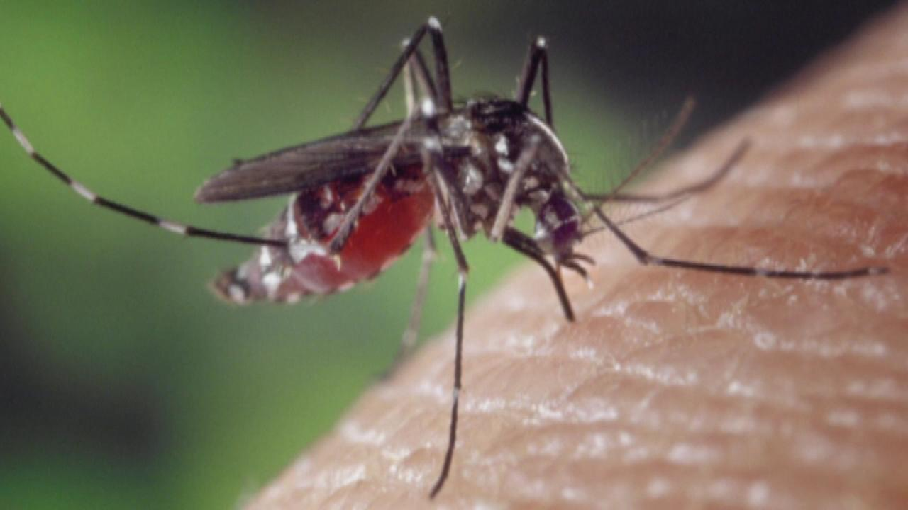 A new list puts Chicago near the top of a list of cities with a mosquito problem.