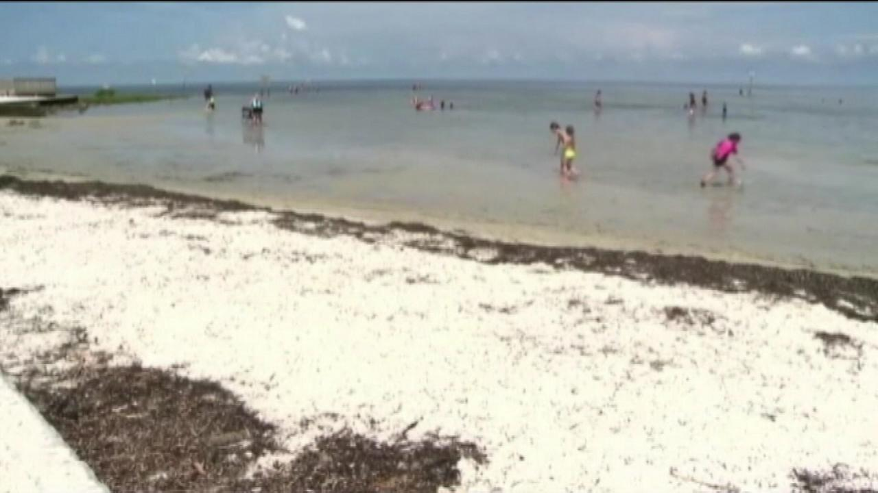 Man S Of Flesh Eating Bacteria After Swimming In Florida