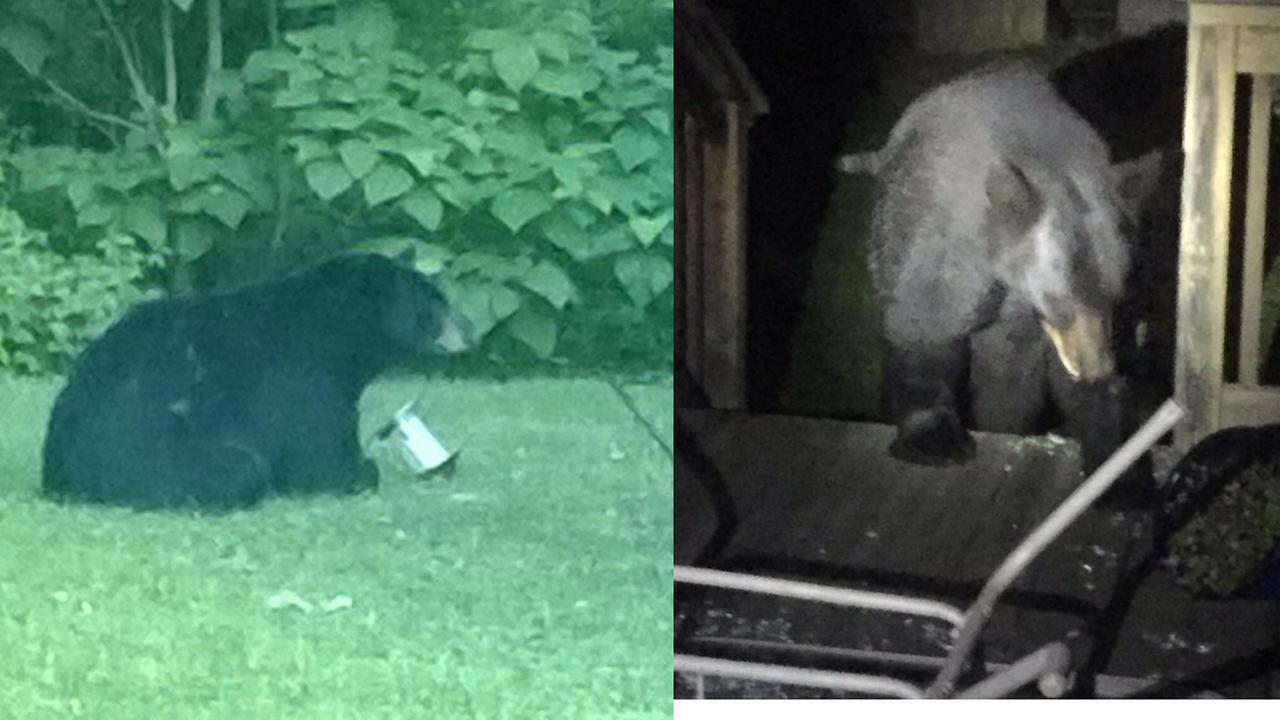 Black bear spotted in Michigan City, Ind.