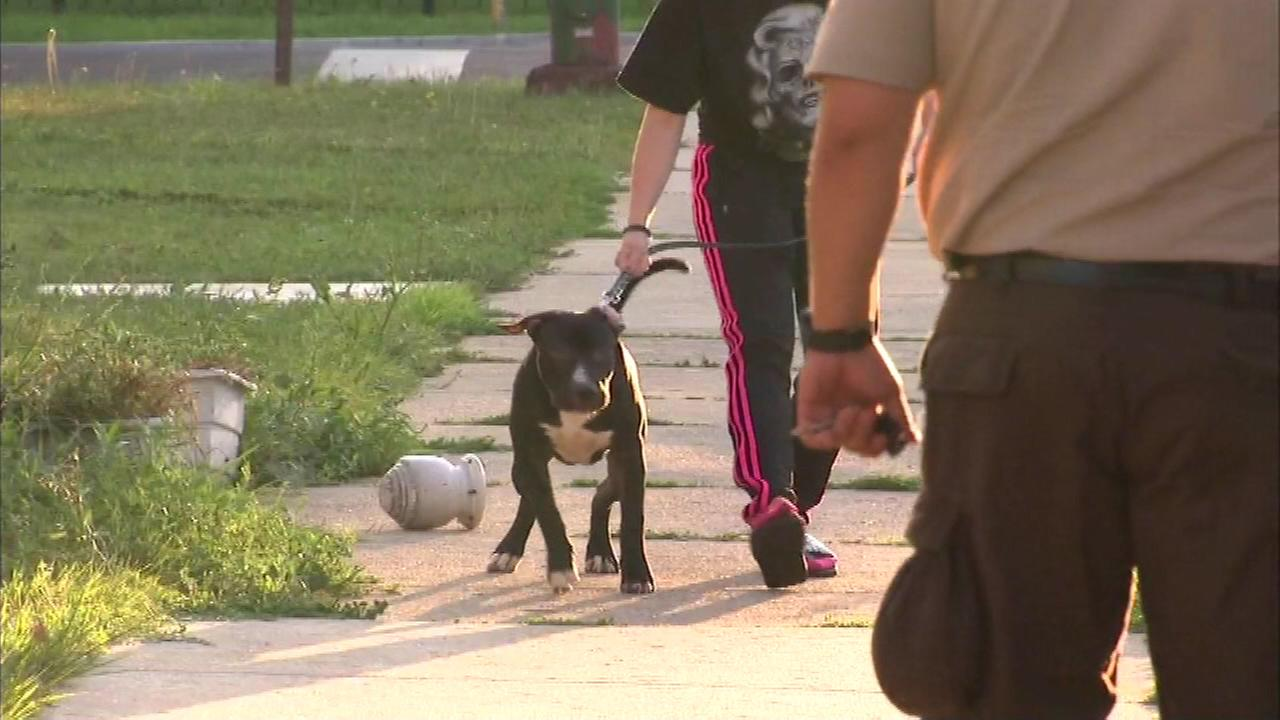 Animal control officers took two adult pit bulls from the Jefferson Park home as well as several puppies and a number of rabbits.