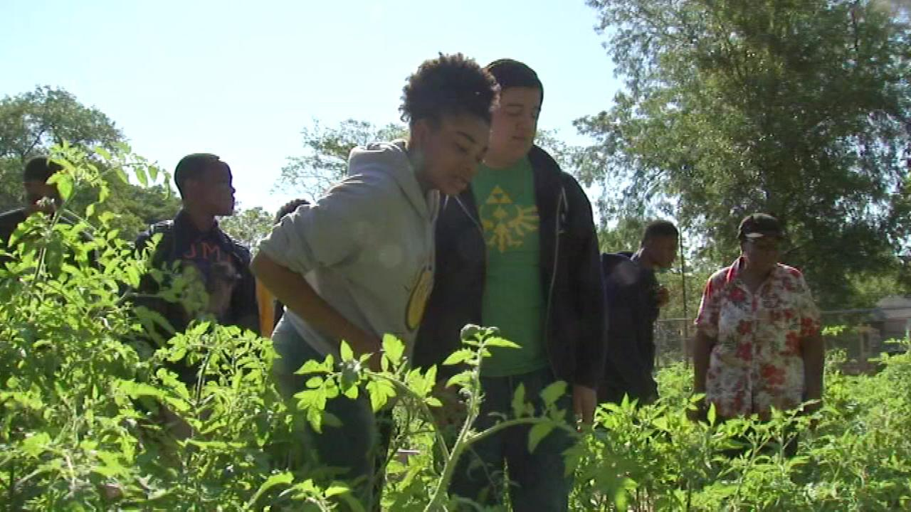 Lindblom Academy students designed an urban garden in West Englewood, and with generous donations and some guidance, they transformed it into an oasis for veterans.