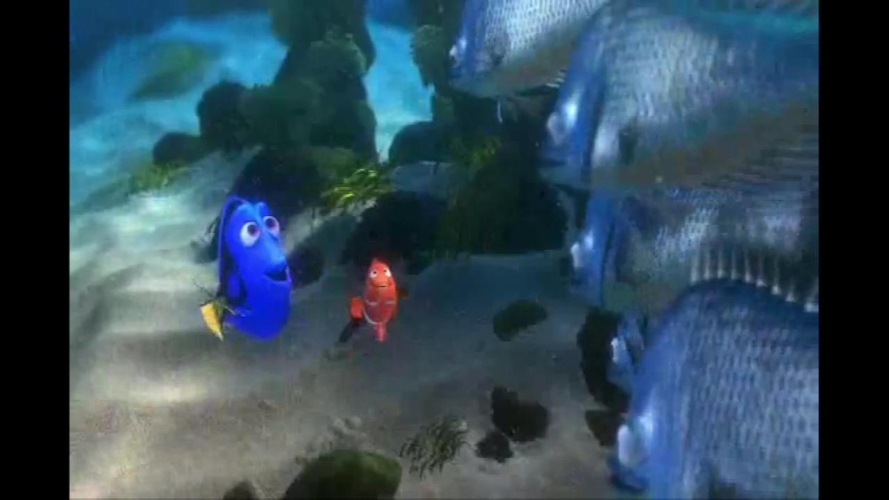 Nemo returns to the big screen next year in Finding Dory, the sequel to the 2003 hit Finding Nemo. This time, a sixth grader from Aurora will provide his voice.