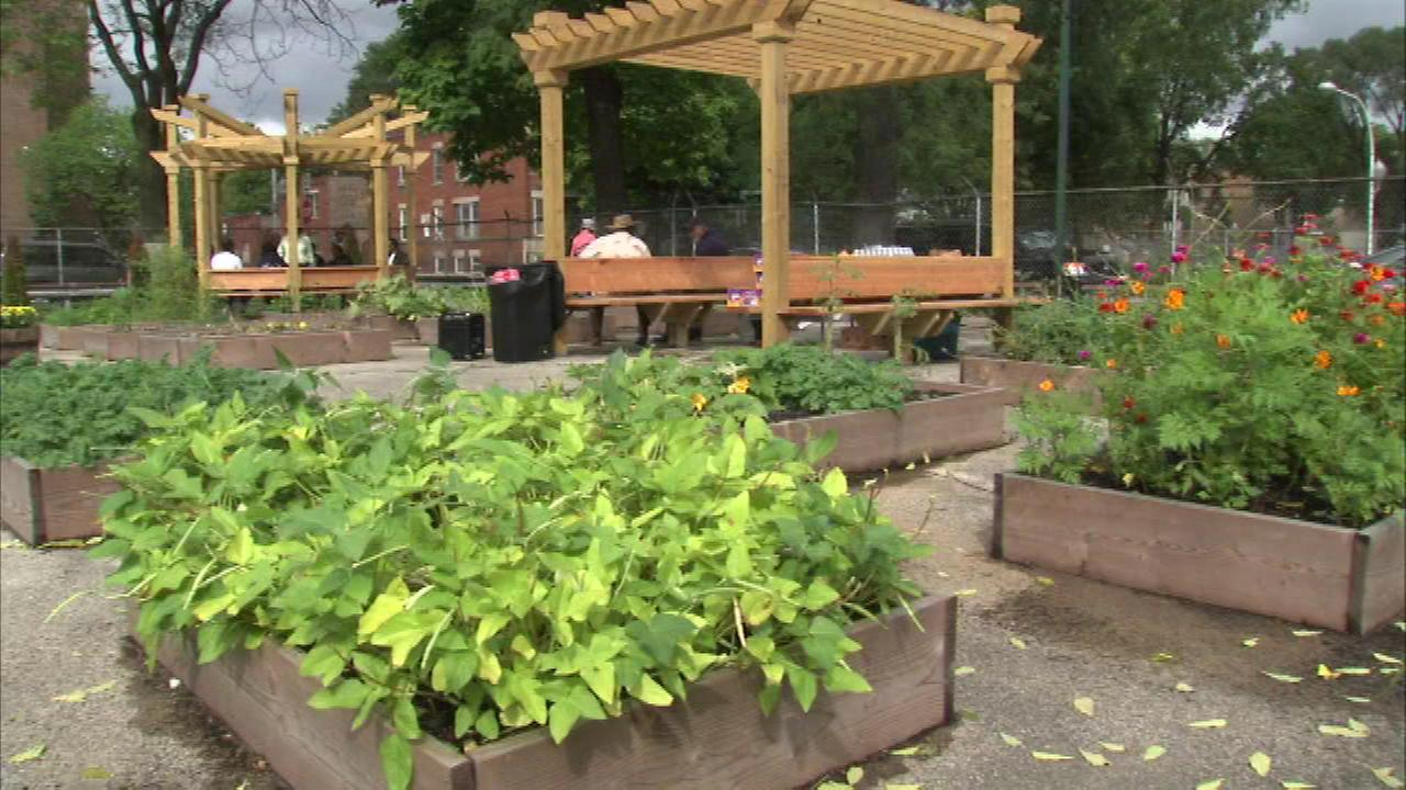 A garden on Chicagos South Side is dedicated to the men and women who have served our country when Englewood Veterans Garden officially opened Saturday.