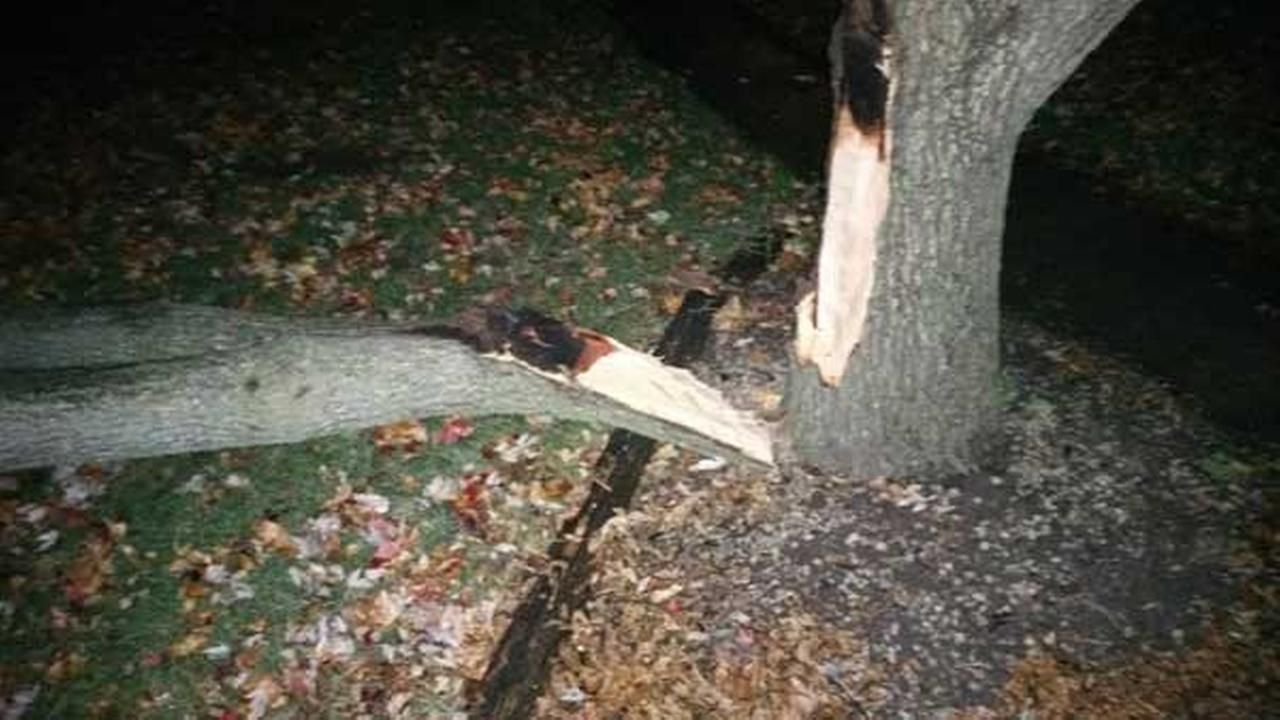 Armen Musanovic, of Yorkville, said lightning split a tree in front of his home and caused part of the tree to fall on his fiances car.