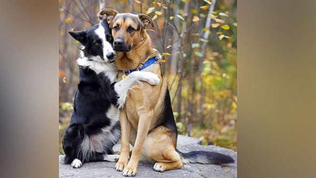 Video of dog giving his 'best friend' a hug goes viral