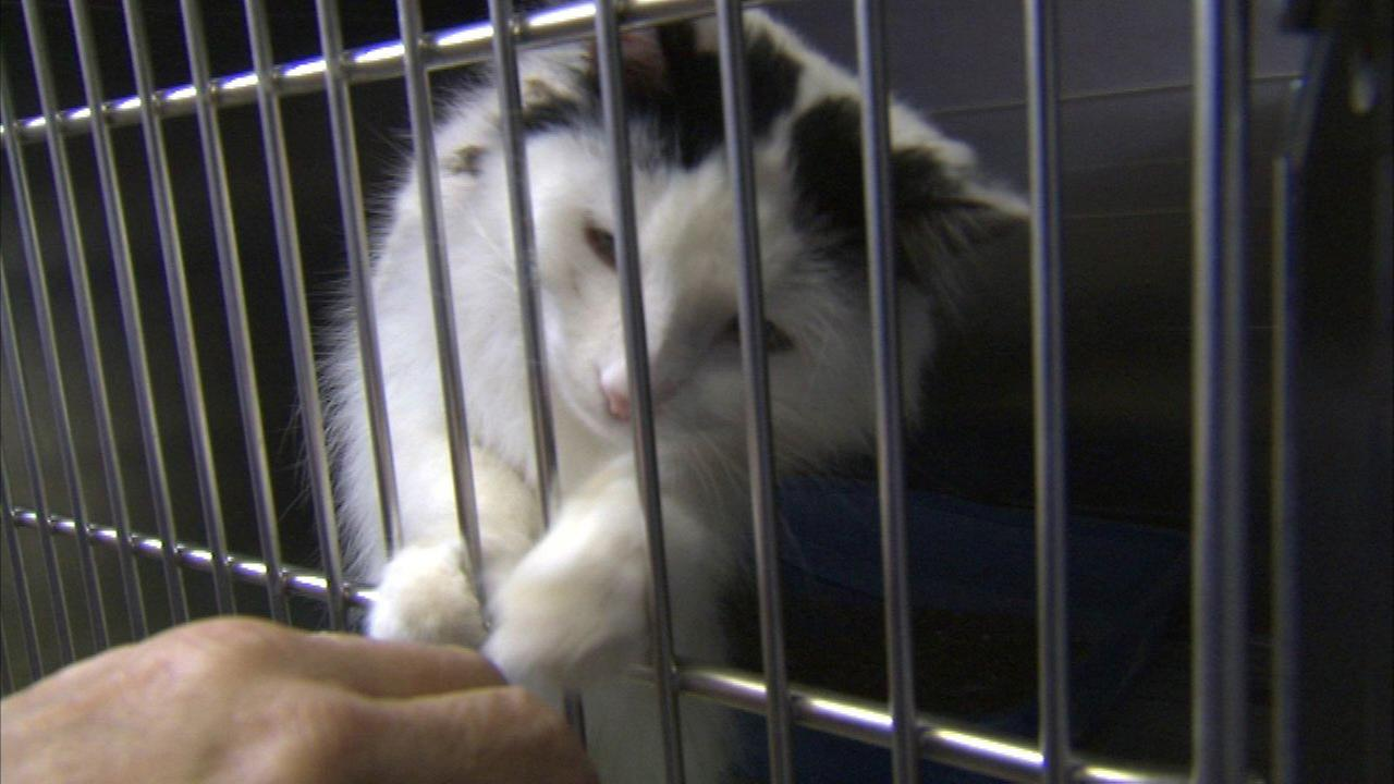 Pets rescued from Lake Station home need care