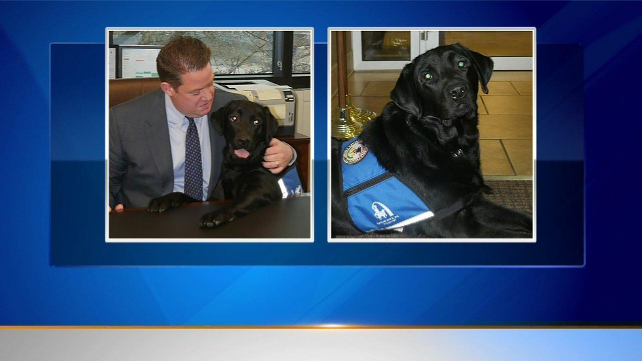 Lake County State's Attorney adds 2nd comfort dog to staff
