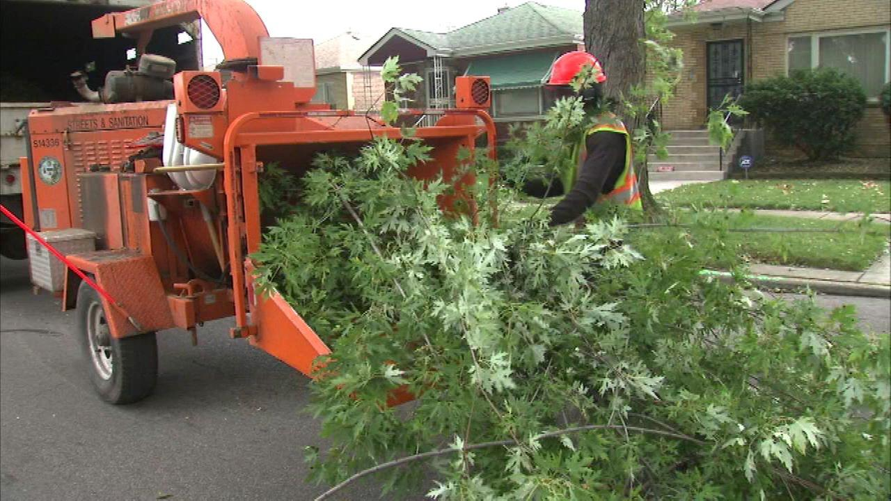 Crews working to trim, protect Chicago trees
