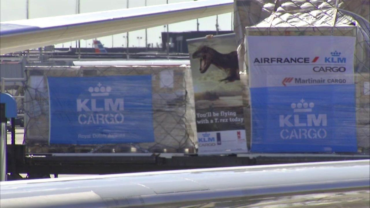 T-Rex fossil flies to Netherlands through O'Hare