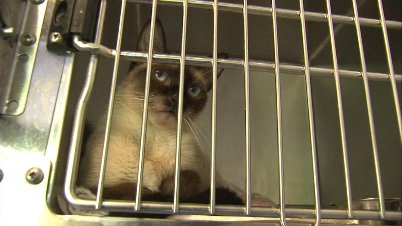 Cats and dogs rescued from Louisiana flooding arrive in Chicago