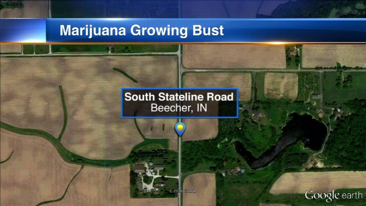 812 marijuana plants found in wooded area in Beecher