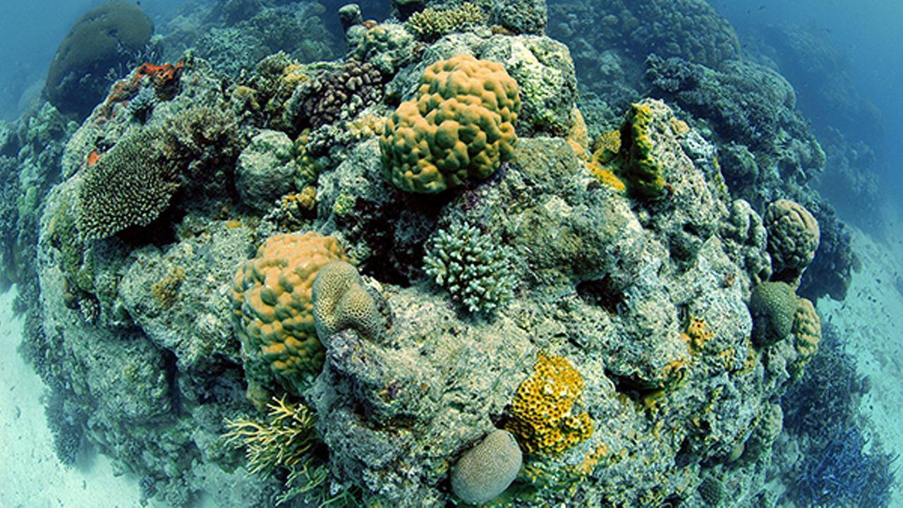 Coral reef pinacle Great Barrier Reef, Australia, Pacific Ocean.