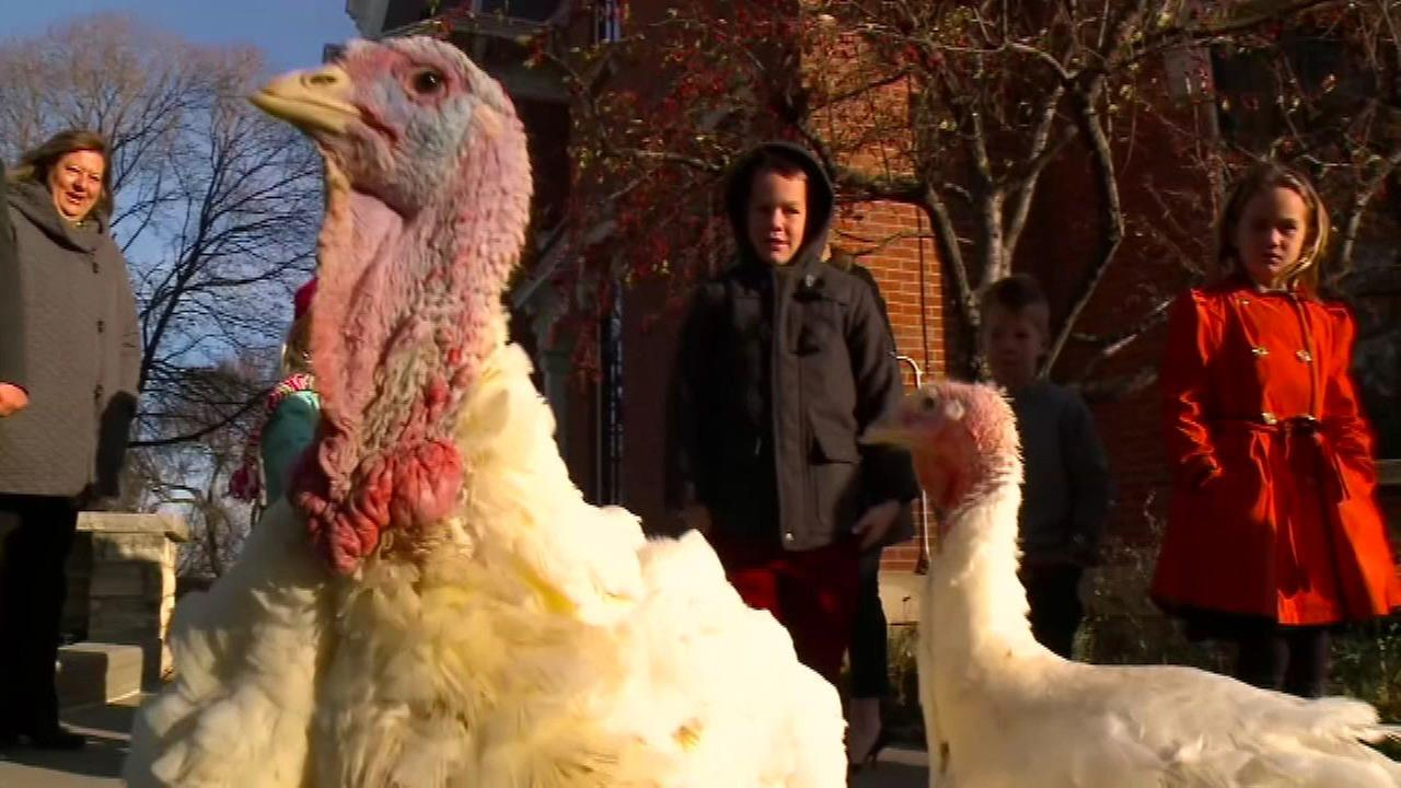 2 turkeys named after Chicago Cubs pardoned for Thanksgiving
