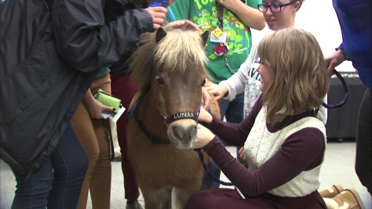 Therapy horses help de-stress college students during finals