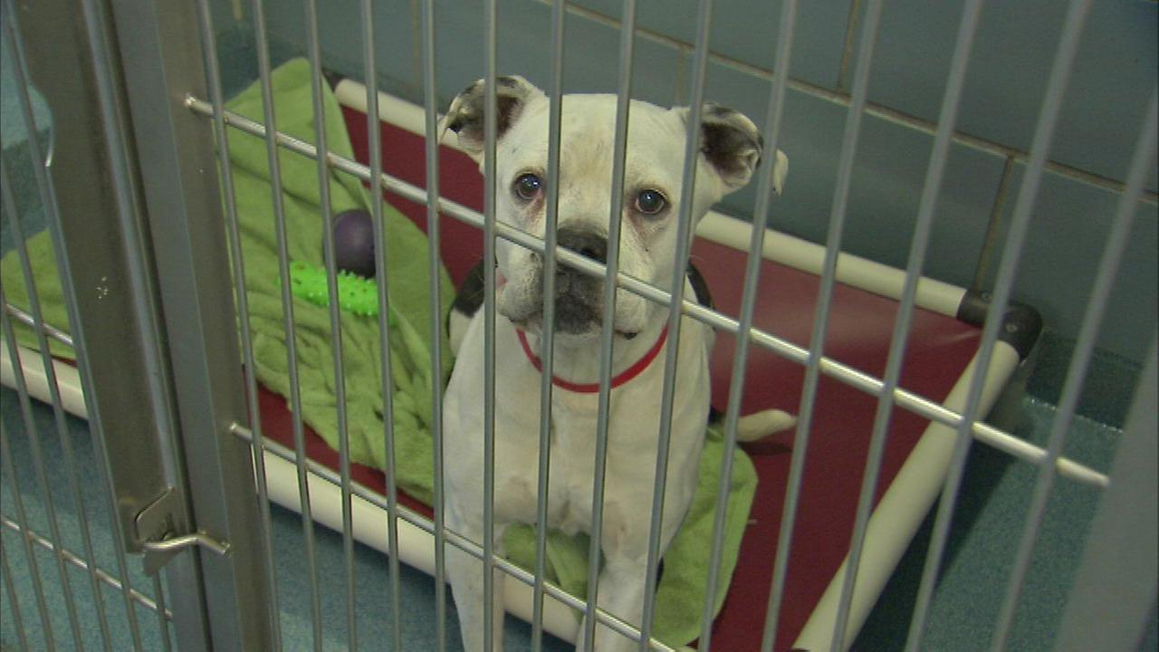 Anti-Cruelty Society reopens after dog flu outbreak