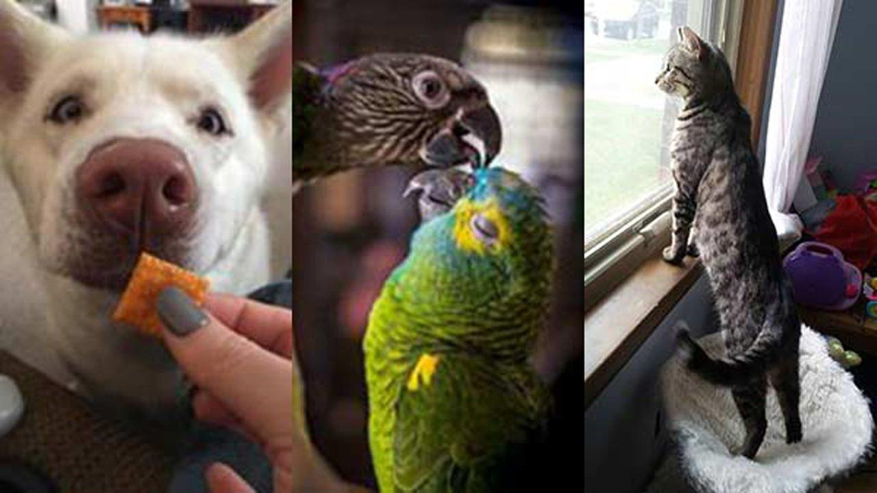 photos happy national pet day share your pictures with