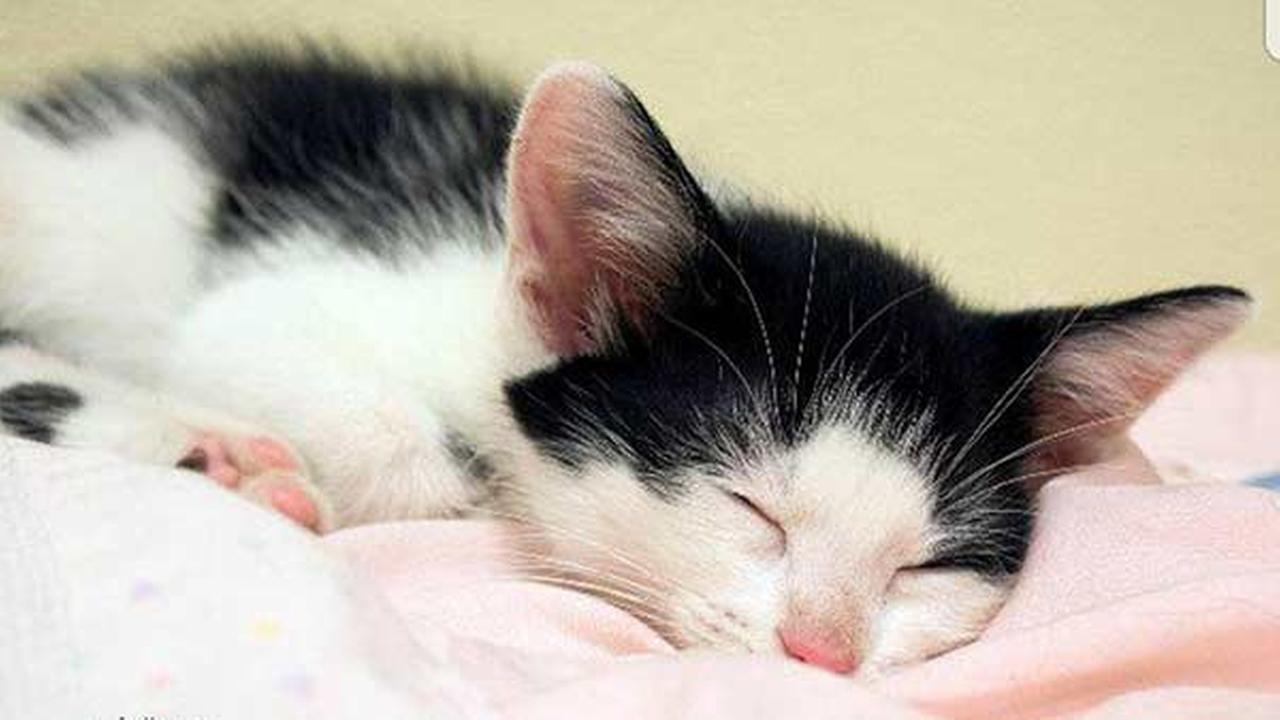 Kitten stolen from Will County Humane Society returned