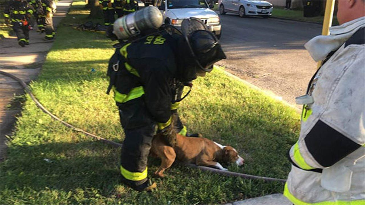 Woman, dog rescued from South Chicago fire