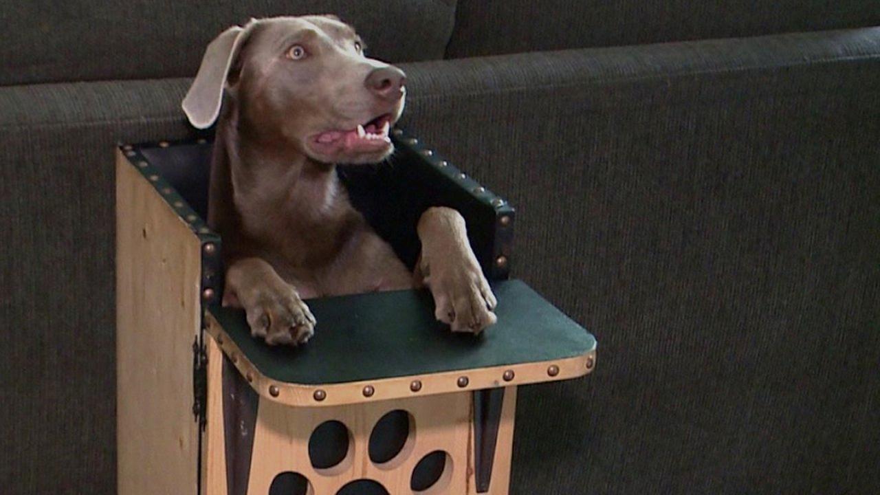 Dog highchair