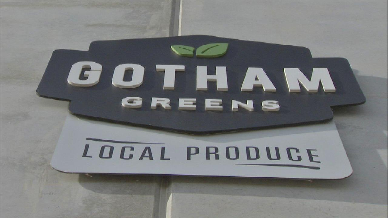 New Gotham Greens greenhouse brings 130 jobs to Pullman