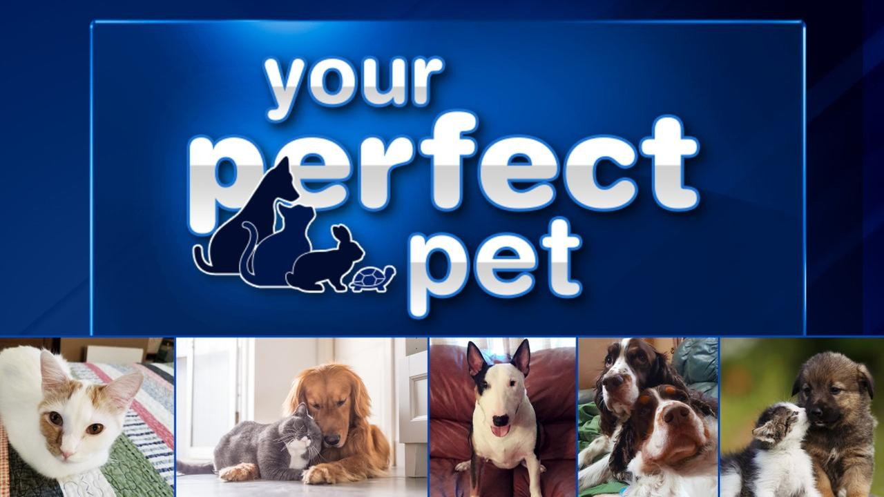 perfect pet If your pet is older or has special needs just let us know we can schedule an express appointment or make special perfect pet cuts (281) 469-6000 10609 grant road building f houston, tx 77070.