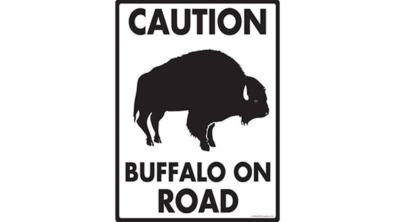 'The buffalo have NOT been contained:' Buffalo on loose in Indiana