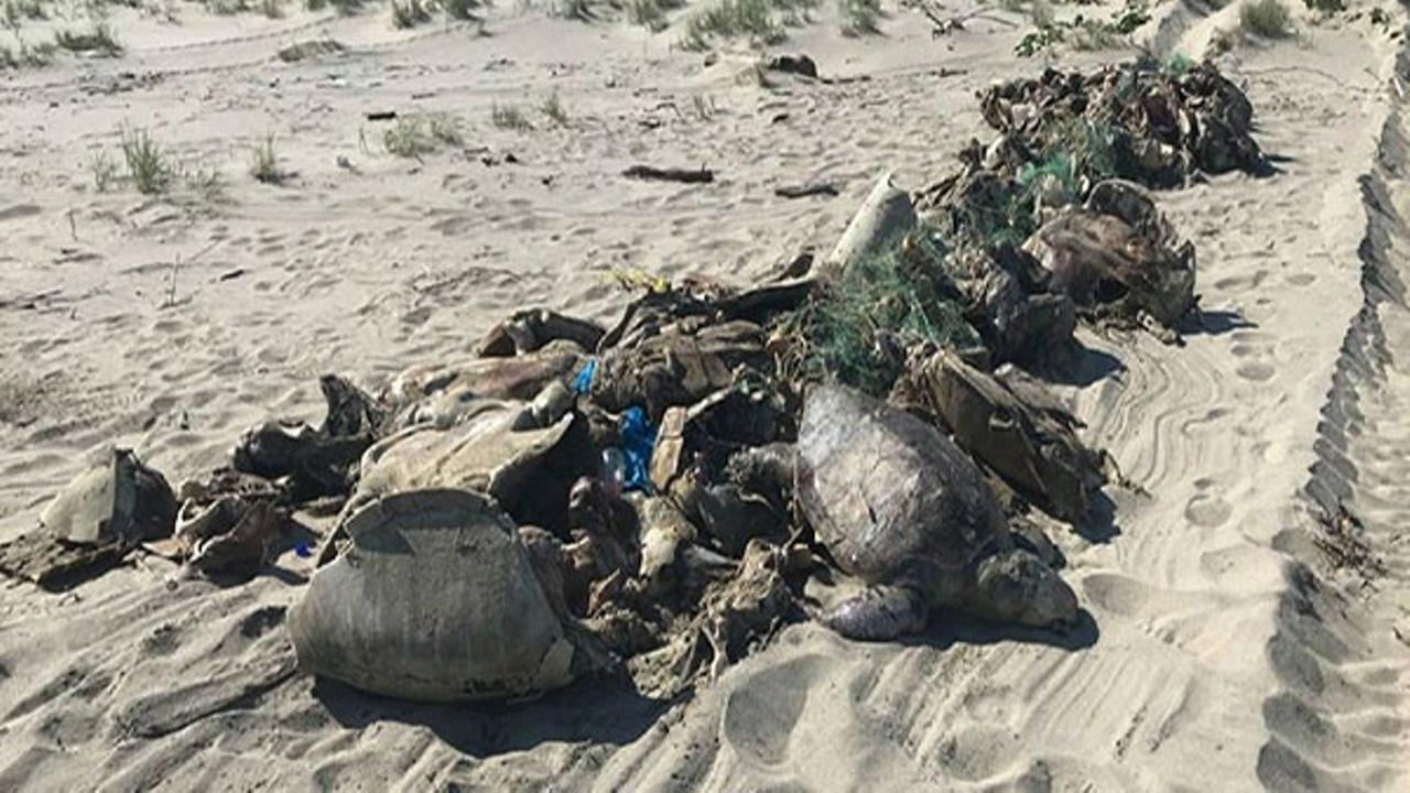 Hundreds of turtles drowned and their corpses had been floating for over a week off the coast of Mexico.