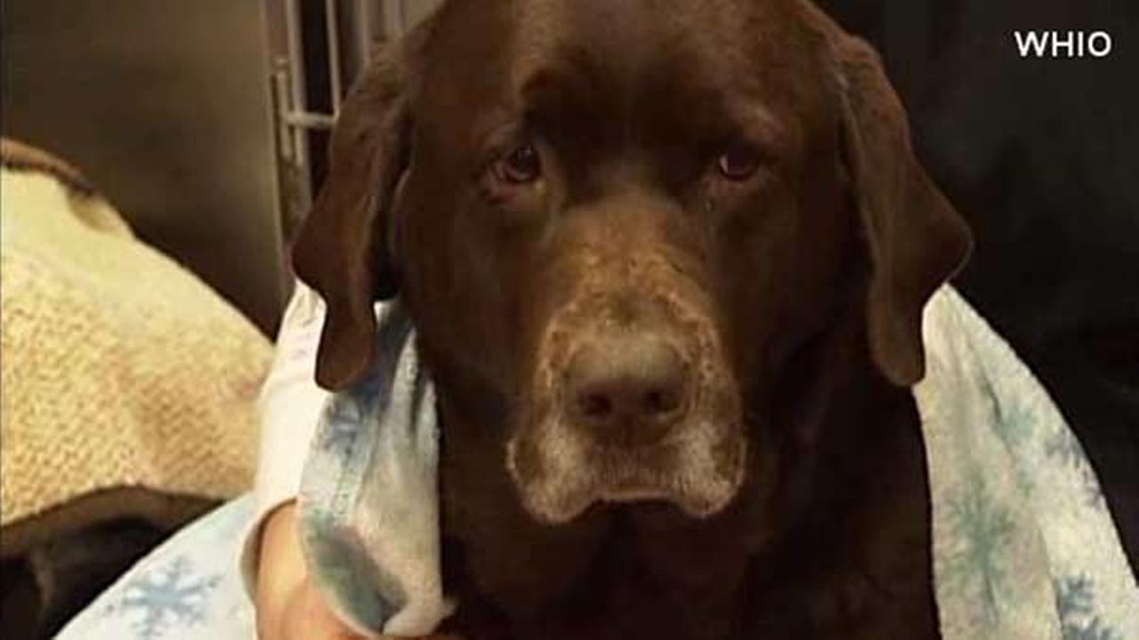 Dog rescued from frozen river in Ohio