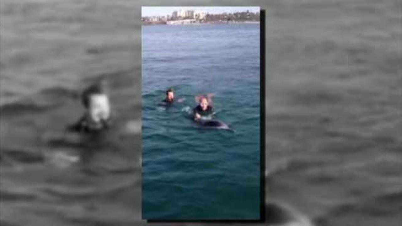 California lifeguards rescue dolphin tangled in rope