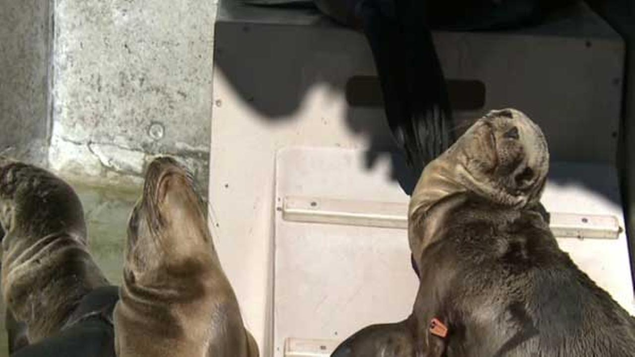 Stranded sea lion pups rescued from California coastline