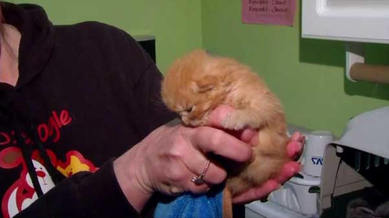 'Miracle' kitten found in rubble days after Indiana fire left 150 homeless