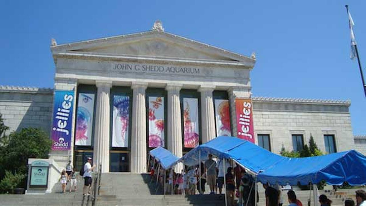 No. 6: Shedd Aquarium in Chicago, Ill.