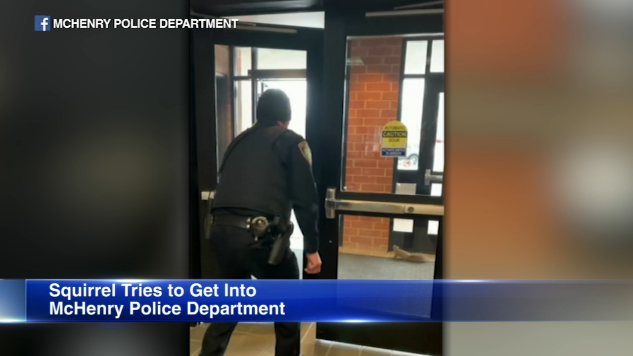 The McHenry Police Department had an unusual intruder in their vestibule.
