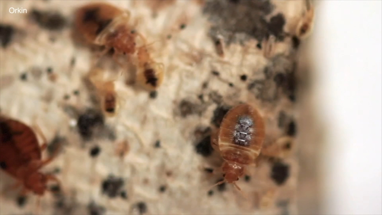 Chicago still has one of the countrys worst bed bug problems, according to a cringe-worthy ranking released by Orkin.