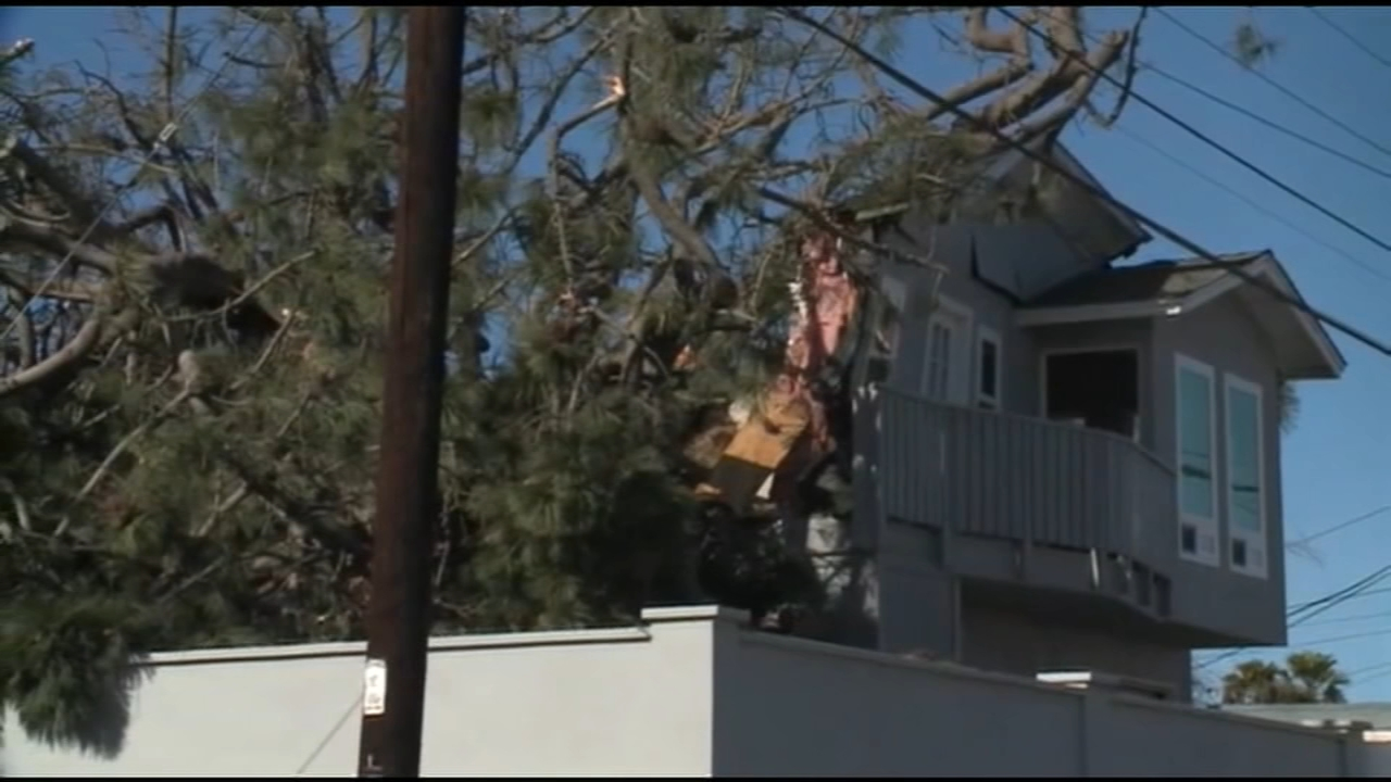 Two people died when a massive tree collapsed onto a house in Point Loma Monday morning, authorities said.